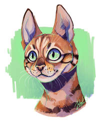 Catto by CreepyRabbit