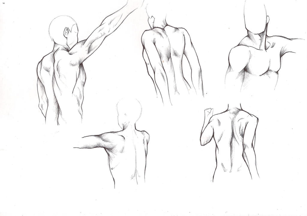 Male Anatomy - Training- Back 1 by Nicky-Milky on DeviantArt