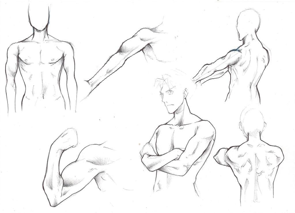 Anime Male Anatomy Images - human body anatomy