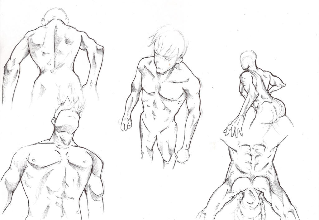 Male Anatomy - Training- 4 by Nicky-Milky on DeviantArt