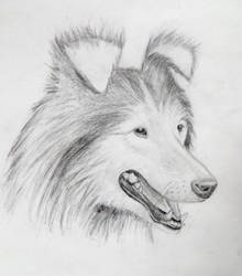 My Mark Crilley Dog Tutorial Results