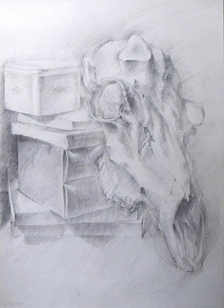 Deer skull study by hanestetico
