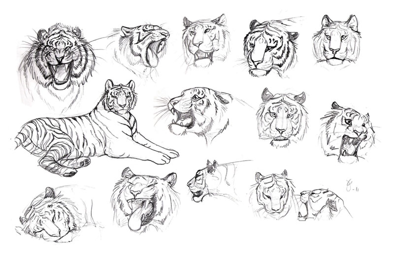 easy cartoon drawings of tigers