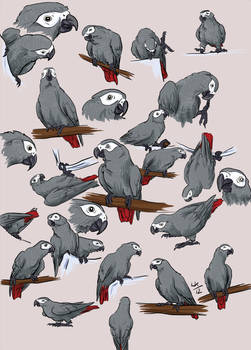11x11 greys