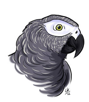 african grey - simple sketch
