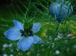 Blue Flower by rocketboy86