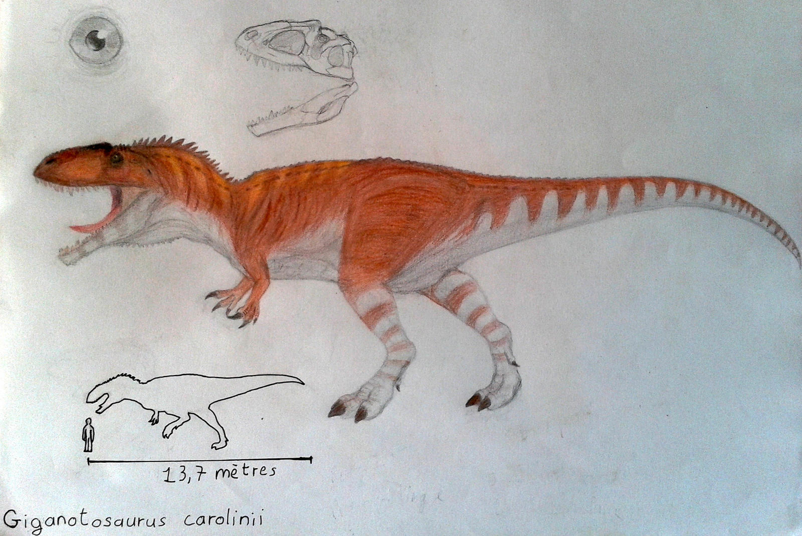how to draw a giganotosaurus