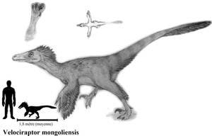 Velociraptor mongoliensis by ZeWqt