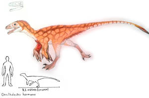 Ornitholestes hermanni by ZeWqt