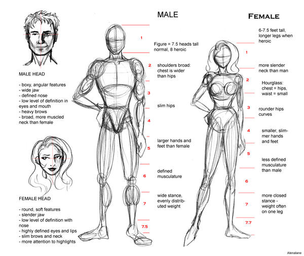 Proportion guide by alenalane on deviantart for Size and proportion
