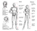 Proportion Guide