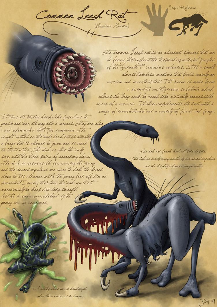 Common Leech Rat by Jish-G on DeviantArt