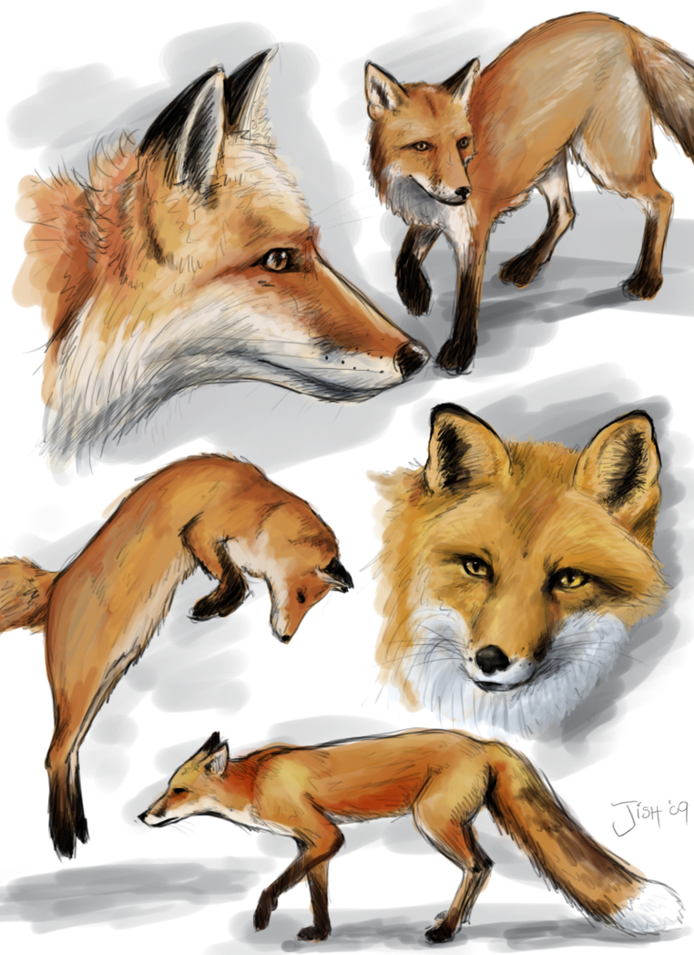 Sketchpage of foxes by Jish-G