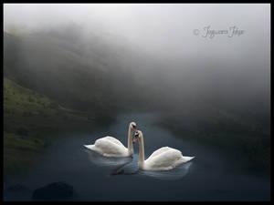 a misty swim together