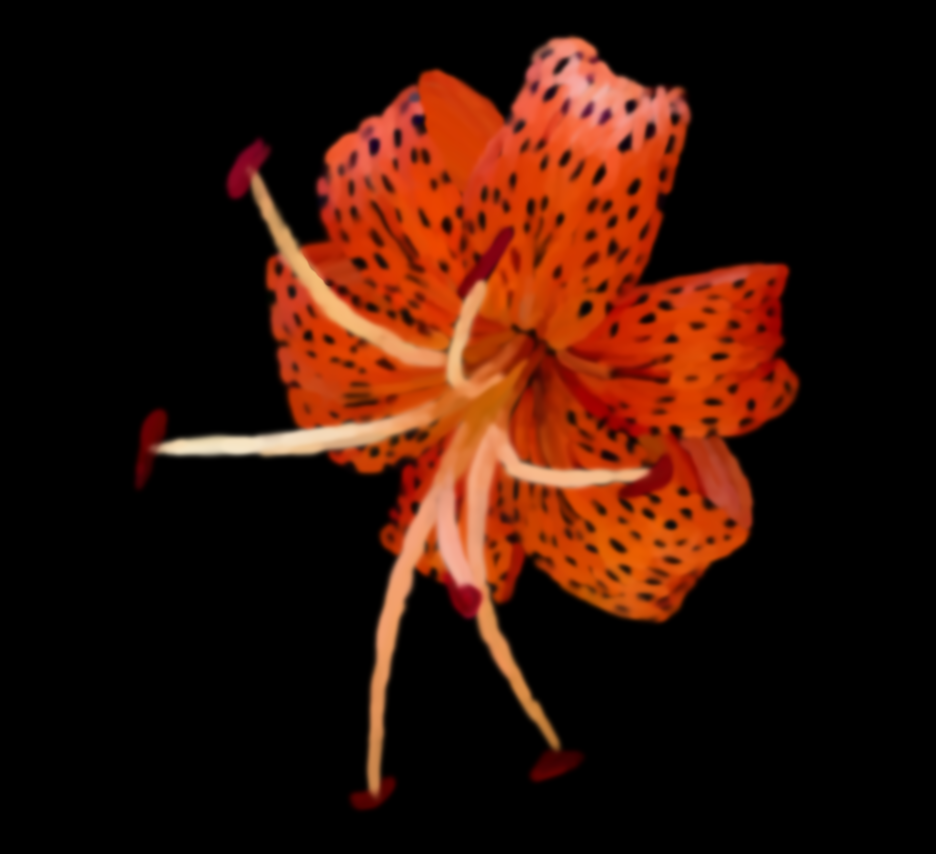 Tiger Lily by Sindae