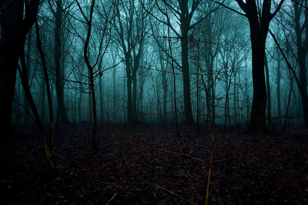 foggy forest by a - photo #1