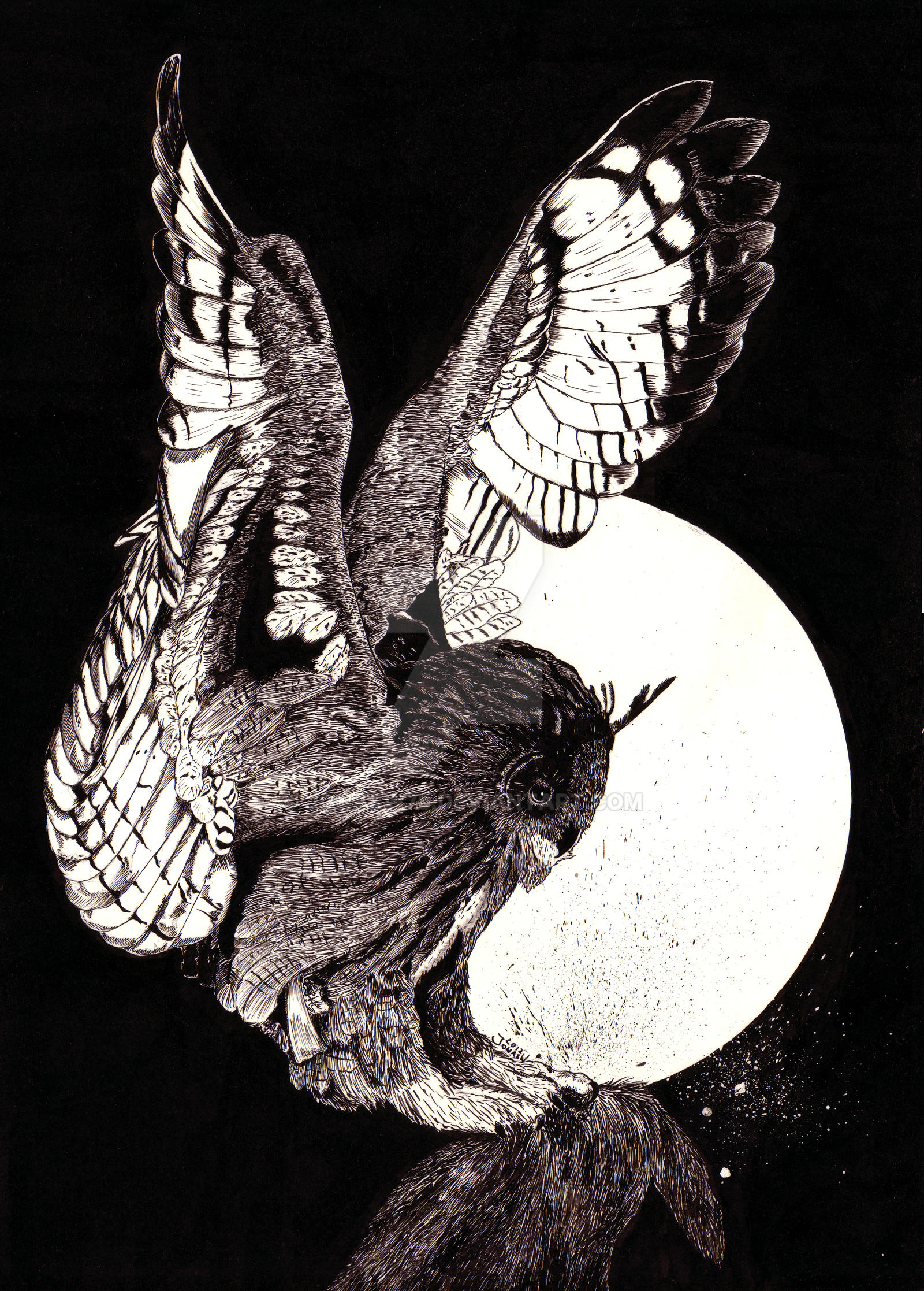 Bird of prey by JonasW78