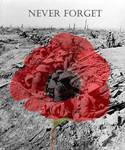 Remembrance Day - Poppy Day