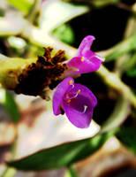 tiny flower by Alba-55