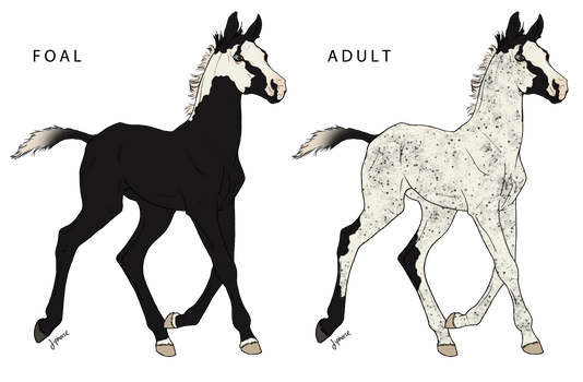 WBS Blackbeard's Ghostly Sails Foal