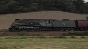 Union of South Africa at Powderham, 18/8/2019