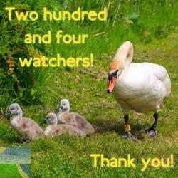 204 Watchers!