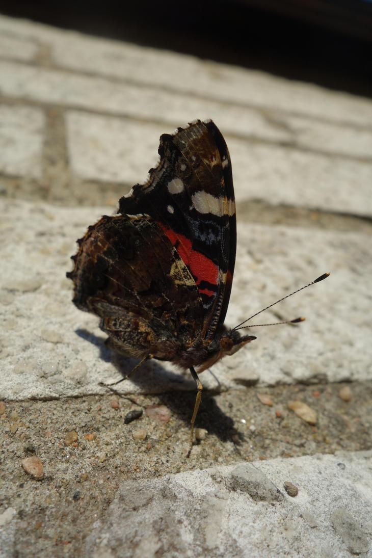 Butterfly by LesleyHammond