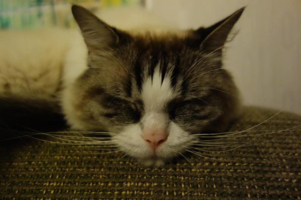 Still sleeping by LesleyHammond