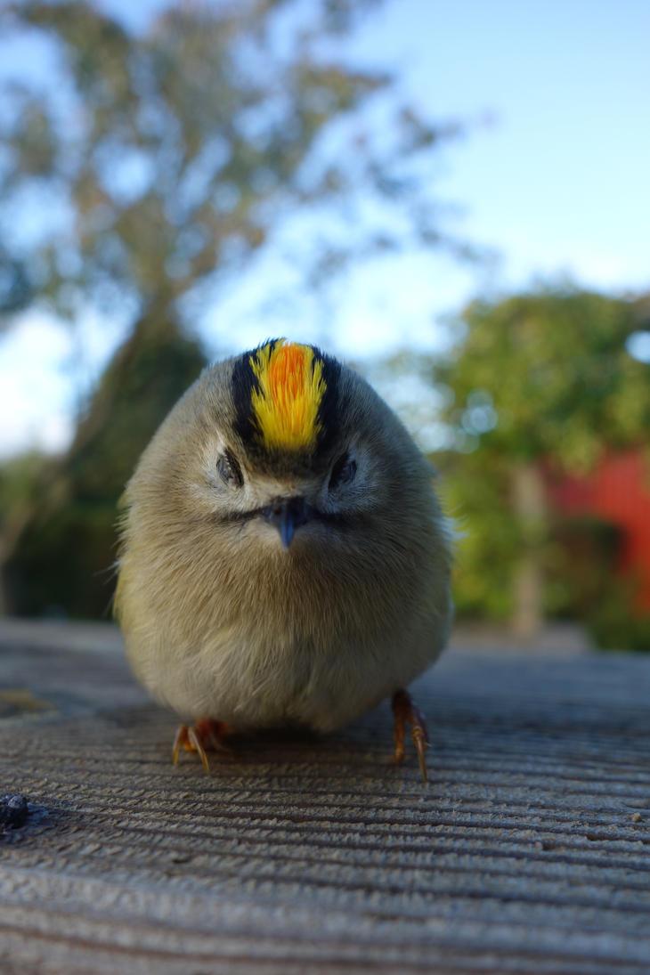 A little bird by LesleyHammond