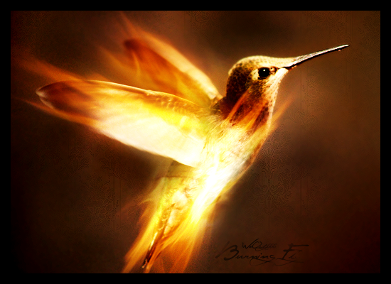 Burning Fly by WoOdy666