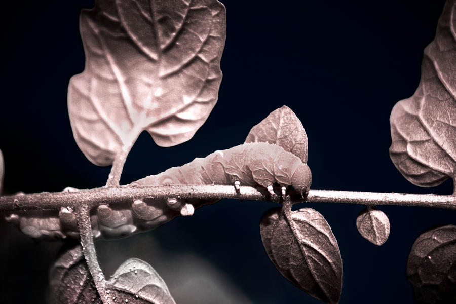 Caterpillar: Infrared by lifeinedit