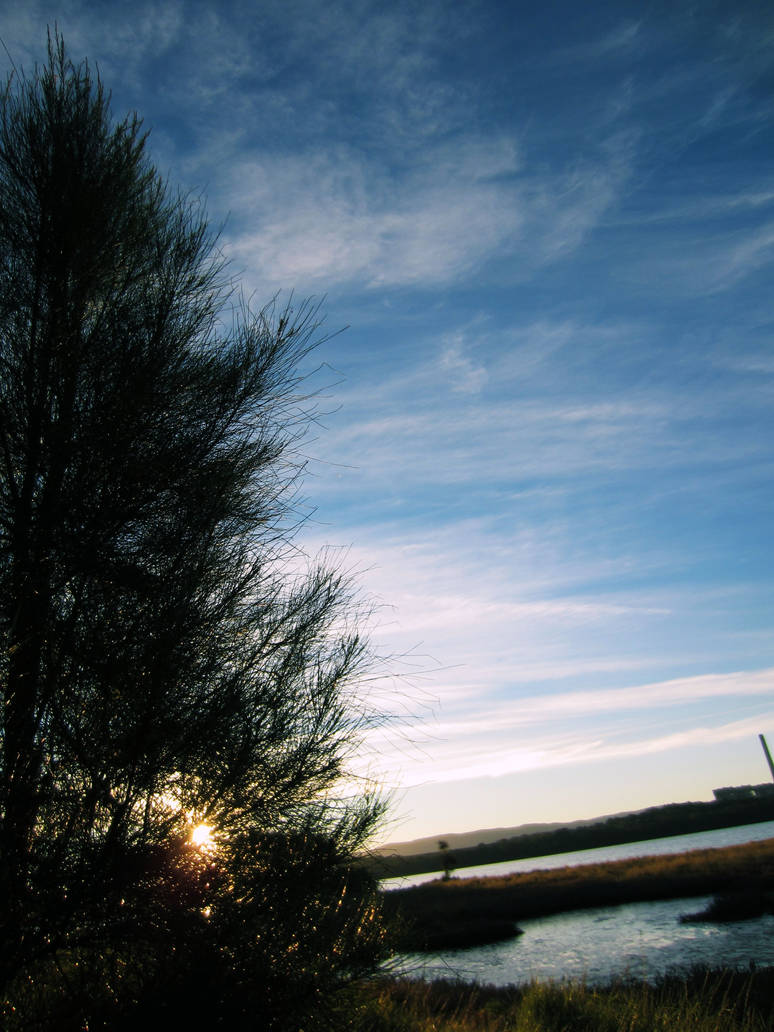 Sunset Tree With The World Tilted