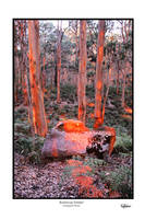 Boranup forrest by TomMontgomery