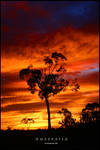 Australia by TomMontgomery