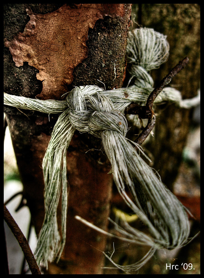 Old knot