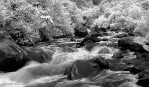 .: flow :.