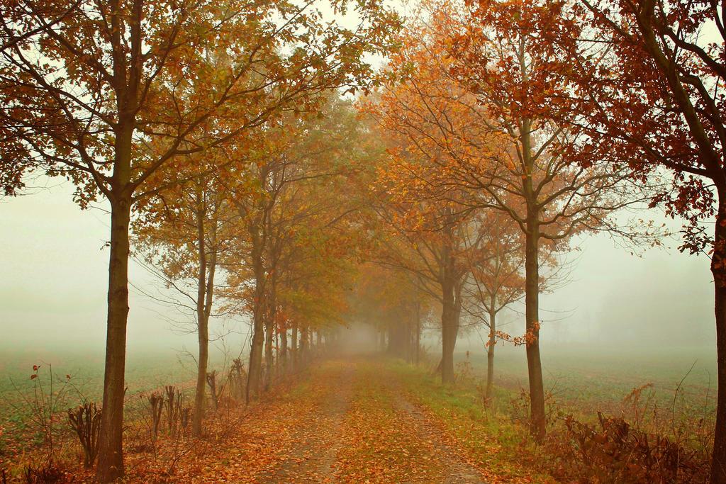 Follow the Path by IndigoSummerr