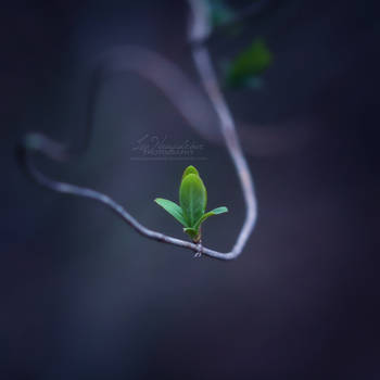 New Life by IndigoSummerr