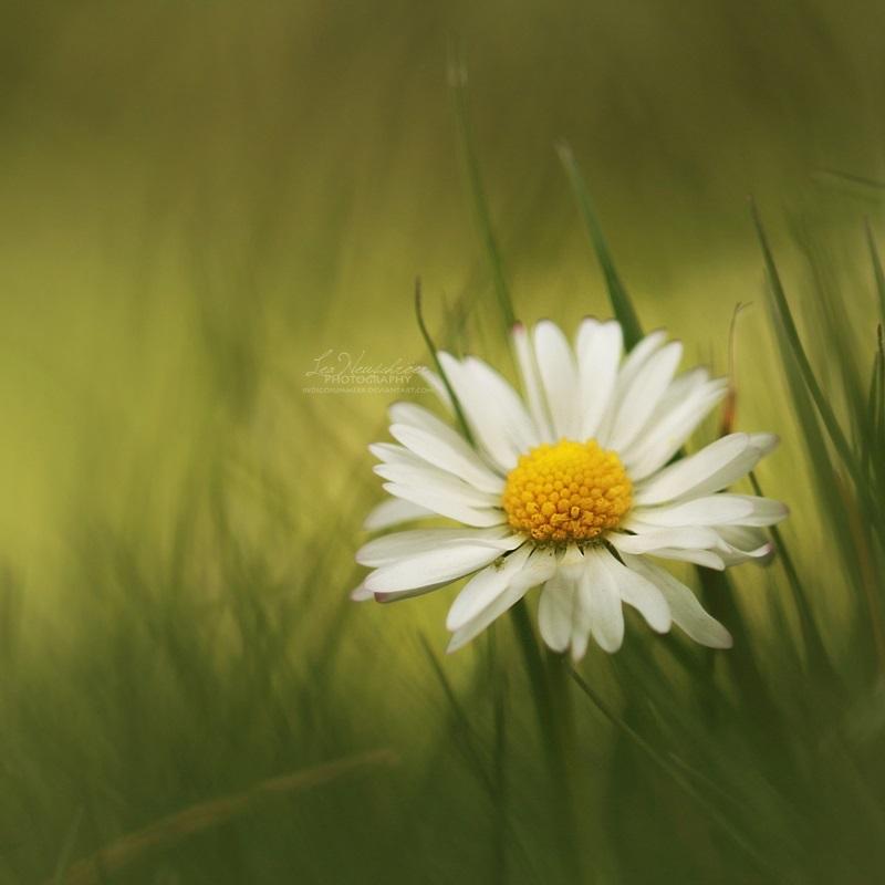 15/52 - Summer in my heart by IndigoSummerr