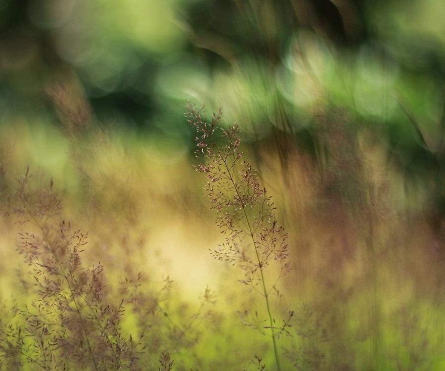 28/52 - Breeze by IndigoSummerr