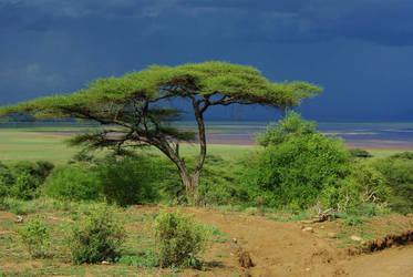 Tanzanie by Bibidef
