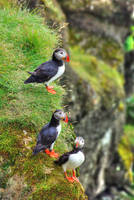 Iceland - land of contrasts (Puffin) by Bibidef