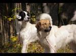 Czech mountain dog xxhrobx