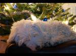 Christmas comfort