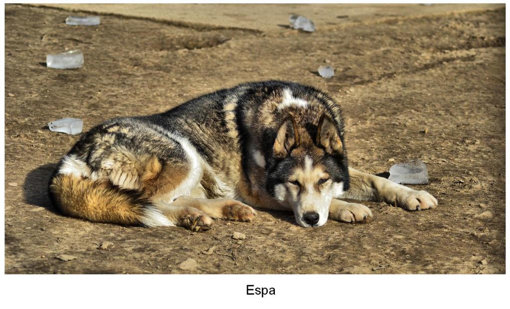 Espa 02-2015 by Pawkeye