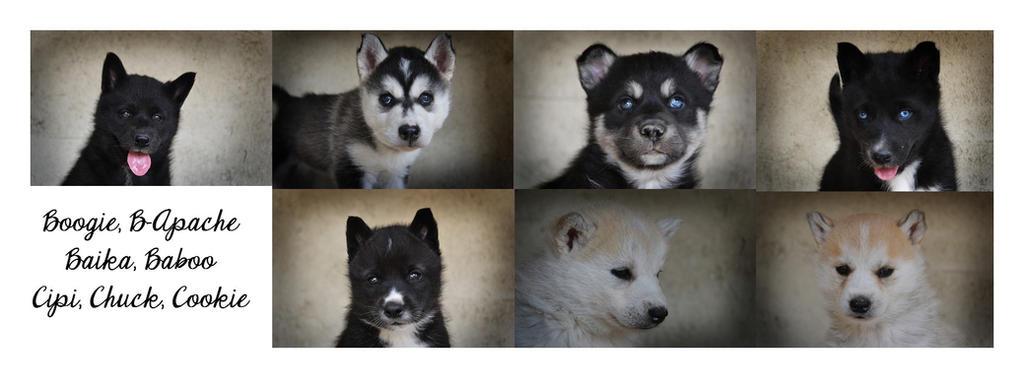 Puppies 5 weeks by Pawkeye