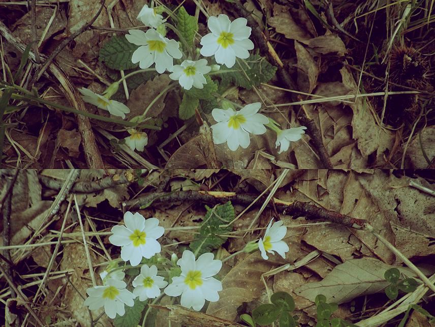 Fotografía artística.  Spring_is_coming_by_ksaku-d3a87rt