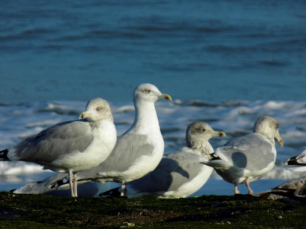gulls in the morning