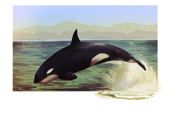 Orca by BooYeh