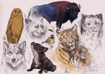 Animalia VI by BooYeh